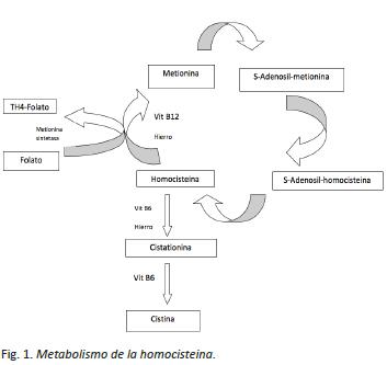 metabolismo-homocisteina